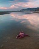 Solo Ster op het Strand royalty-vrije stock afbeeldingen