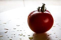 Solo tomate Fotografía de archivo libre de regalías