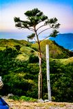 Solo trädöverkant som förbiser berget arkivfoto