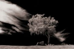 Solo tree. Tree in field with cloudscape, infra red Royalty Free Stock Photography