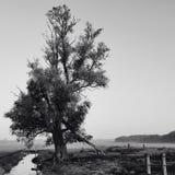 solo tree Arkivfoto