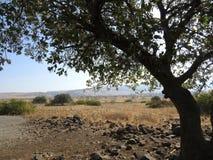 Solo  tree. Solo green tree in hills landscape Stock Photo