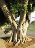 Solo  tree. Solo green tree in a  urban  landscape Stock Photo