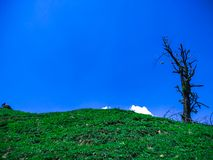 Solo Tree on a hill Without leaves with blue sky as a background royalty free stock images