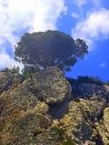SOLO Tree Stock Image