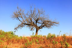 Desolate tree. Single tree on wild landscape Stock Photography