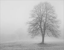 Solo tree in thick winter fog Royalty Free Stock Image
