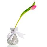 Solo tulipán Foto de archivo libre de regalías