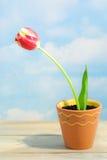 Solo tulipán en crisol Imágenes de archivo libres de regalías