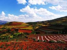 Solo vermelho de Yunnan seco Fotos de Stock Royalty Free