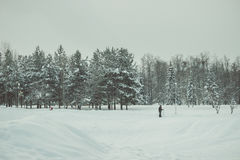 Solo in the winterland Stock Photography