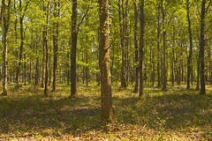 Sologne woods. Royalty Free Stock Images