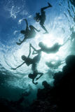 Solomon Islanders Swimming Playfully Stock Images