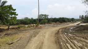 Solomon Islands Stock Images