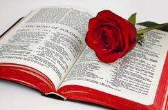 solomon rose de s Image libre de droits