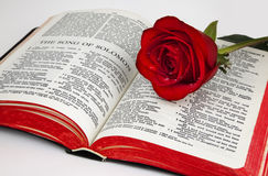 Solomon's Rose. A single red rose rests upon the pages of an old bible open to the romantic chapter,  Song of Solomon, on a white background Royalty Free Stock Image