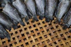 Solona ryba Obraz Stock