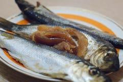 Solona rybia Clupea harengus błona z kawiorem kłama na talerzu Zakończenie, selekcyjna ostrość obraz stock