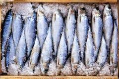 Solony śledź dla sprzedaży przy rybim rynkiem Obrazy Stock