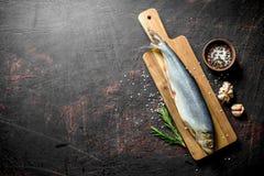 Solony śledź z pikantność, rozmarynów i czosnku cloves, zdjęcie stock