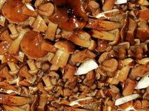 Solony miodowy grzyb Solić pieczarki Solone pieczarki są wielkim przekąską dla ajerówki fotografia royalty free