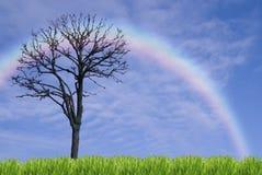 Solos árbol y arco iris Fotos de archivo