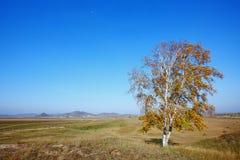Solos árboles del otoño Foto de archivo
