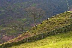 Solos árboles en las colinas, districto máximo. Fotos de archivo libres de regalías