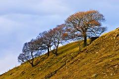 Solos árboles en las colinas, districto máximo. Fotografía de archivo
