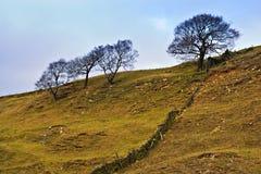 Solos árboles en las colinas, districto máximo. Imagen de archivo libre de regalías