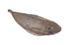 Solos únicos pescados frescos enteros Fotografía de archivo
