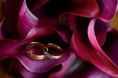 Solotouch due anelli si trova sulle calle di Borgogna del petalo Fotografie Stock