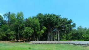 Solpanel på Pondicherry, Indien royaltyfri foto