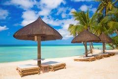 Solparaplyer och strandsängar under palmträden på den tropiska stranden Royaltyfria Foton