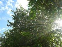 Solrayes med blå himmel Royaltyfri Foto