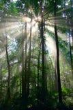 Solresning i en Misty Forest Arkivbild