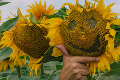 Solros med ett leende Royaltyfri Foto