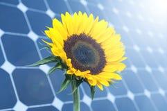 Solros och sol- paneler Arkivfoto