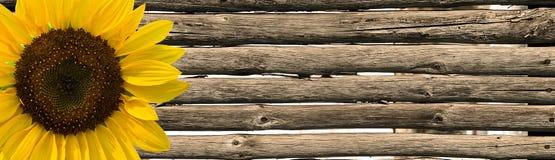 Solros- och staketpoler Arkivfoton