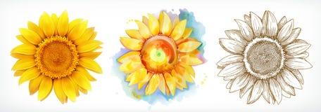Solros olika stilar, vektorteckning, symbolsuppsättning vektor illustrationer