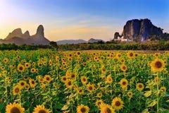 Solrosfält och berg som bakgrund Arkivbild
