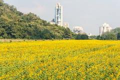 Solrosfält och fabrik Royaltyfri Foto