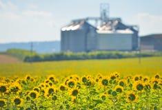 Solrosfält- och kornsilor Arkivbild