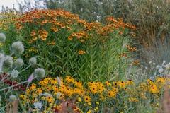 Solrosfamiljen blommar i trädgården royaltyfri bild