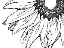 Solrosillustration Royaltyfri Fotografi