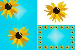 Solrosillustrationuppsättning Royaltyfri Fotografi