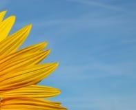 Solroskronbladnärbild med bakgrund för blå himmel Arkivfoto