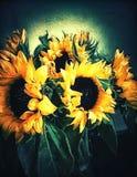 Solrosor för vän Arkivfoto
