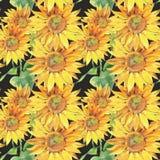 Solrosor Hand målad vattenfärgillustration blommor mönsan seamless stock illustrationer