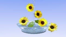 Solrosor i en glass bunke med vatten arkivfoto